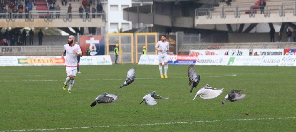 piccioni al riviera